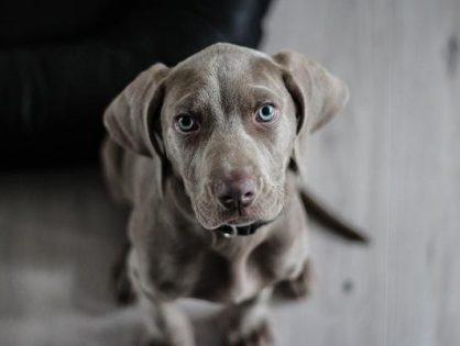 Polecana karma dla psów