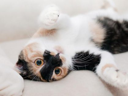 Sprzedaż kotów we właściwym momencie