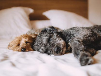 Warty polecenia materac dla psa
