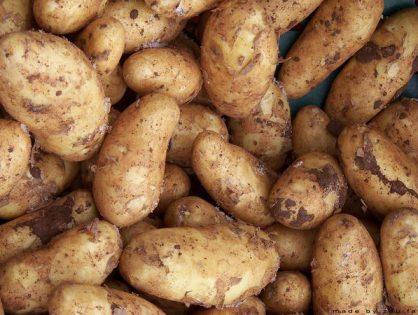 Nowoczesna duża hurtownia ziemniaków