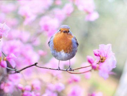 Jak skutecznie odstraszyć ptaki?