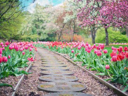Zaprojektowanie ogrodu warto pozostawić w rękach profesjonalistów