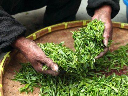 Prawidłowe przechowywanie herbaty